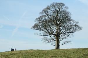 Baume - tree